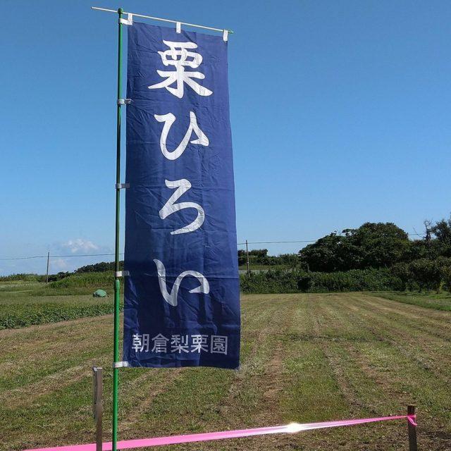 栗園の開園日は、9月26日(土)です
